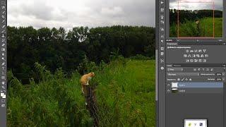 масштабирование объекта в PhotoShop. Как изменить размер объекта в фотошопе