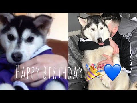 HAPPY BIRTHDAY TO THE GREATEST FEMALE DOG ALIVE! [UNSEEN PUPPY PICTURES & VIDEOS]