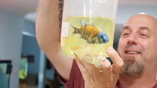 DON'T Buy Aquarium Fish Without Watching This First!