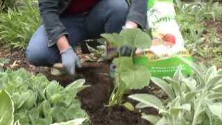 How To Plant a Zucchini
