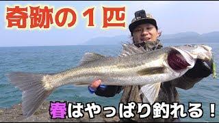 堤防から春は釣れる魚が沢山!! thumbnail