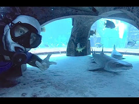 SWIMMING WITH THE SHARKS IN ATLANTIS THE PALM!!