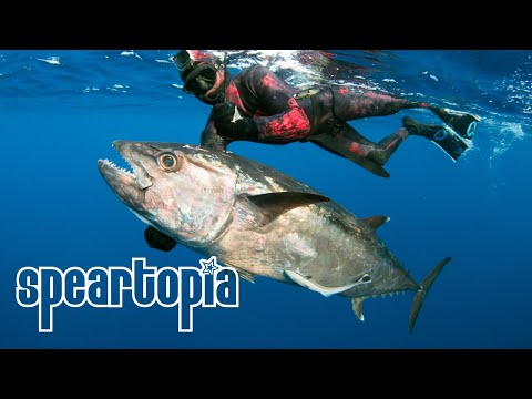 SPEARTOPIA - Spearfishing Madagascar's Northern Tip