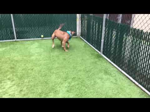 New York Dog Rescue - ADOPTIONS - Rescue Me!