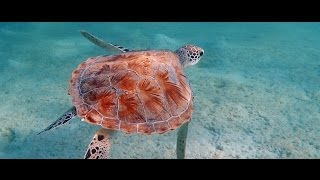 GoPro Hero 3: Amazing Scuba Diving in Egypt with turtles and clown fishes