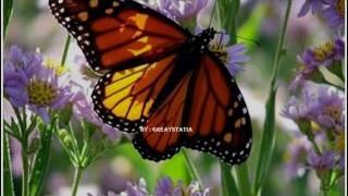 Cache Deluxe - Vlindertjes