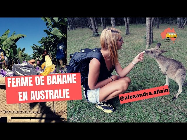 Travailler dans les fermes de BANANES en Australie ( Tully)