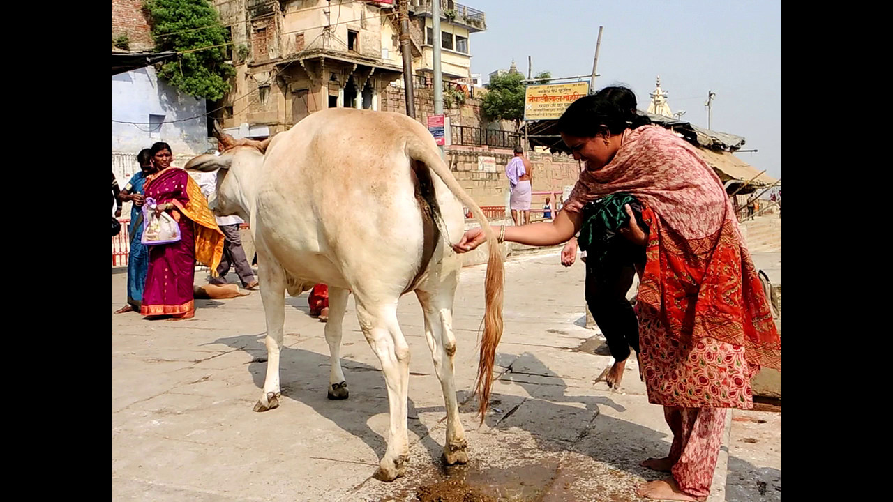 Image result for खाली पेट गौमूत्र