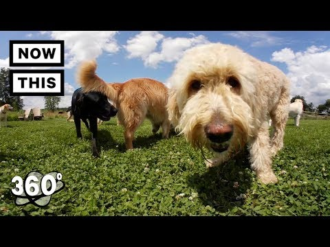 Lucky Puppy Doggy Daycare | Unframed by Gear 360 | NowThis