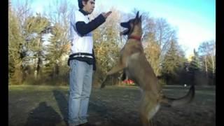 Обучение на кучета  Училище за кучета К9 World Dog School