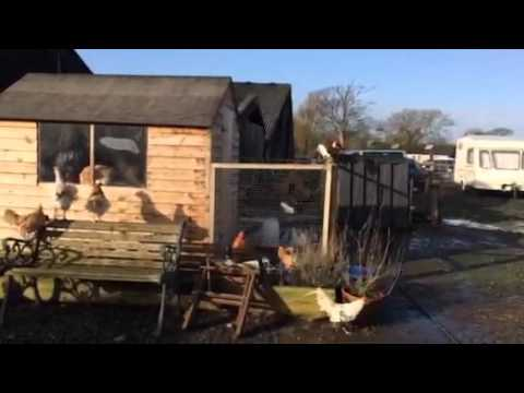 Introduction to Manor Farm Poultry