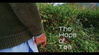 The Hope of Tea (Documentary Film)