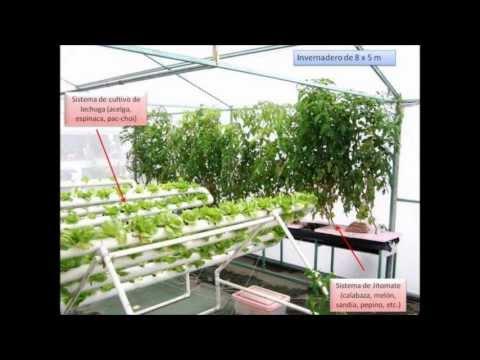tipos de invernaderos loquendo primera parte youtube