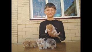 У нашей кошки родились котята .Они такие милахи\ придумайте нашим котятам имена!