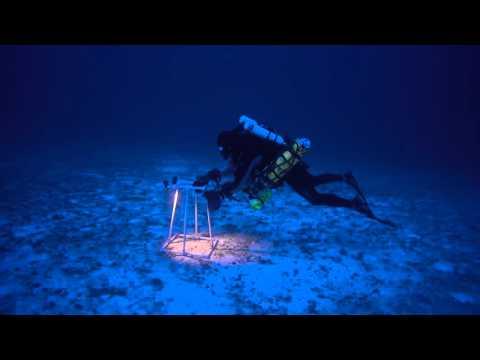 Brian Hauk Conducts Benthic Survey