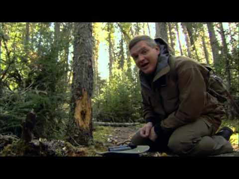 Ray Mears - Boreal Forest Walkabout , Canada - Northern Wilderness