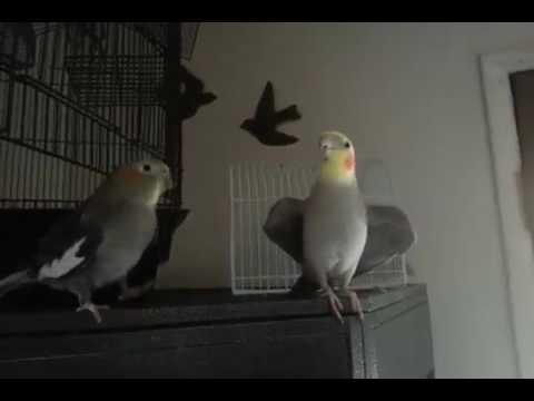 Фурри попугаи секс