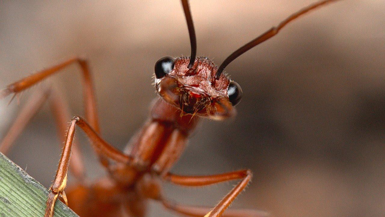 Ant Video