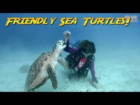 Friendly Sea Turtles!  | JONATHAN BIRD'S BLUE WORLD