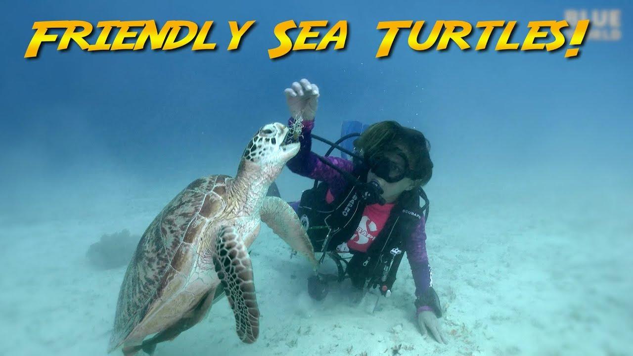 Friendly Sea Turtles!    JONATHAN BIRD'S BLUE WORLD