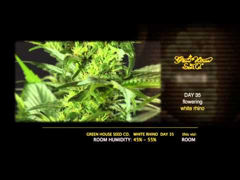 White Rhino - Green House Grow Sessions