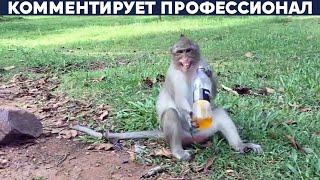 Обезьяну-алкоголика посадили пожизненно