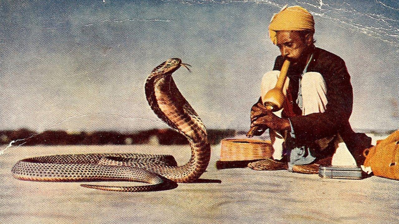 Jaipur, Amber Fort Snake Charmer | Photo