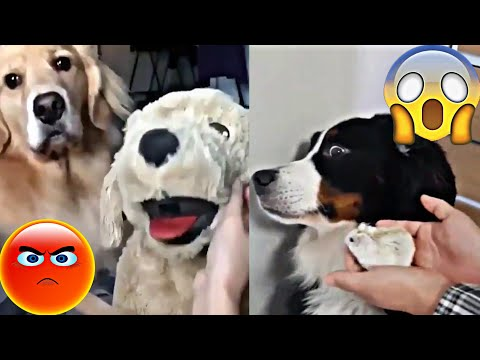 Funny Dogs Vines Compilation | You Could Die Laughing While Watching This Ep 5