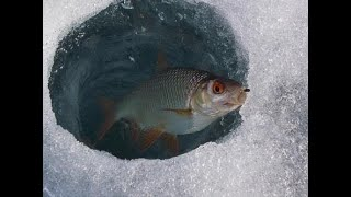 рыбалка зимой отчет о рыбалке за 21 02 ловля мирной рыбы