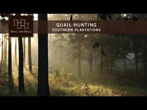 Southern Plantations Quail Hunting