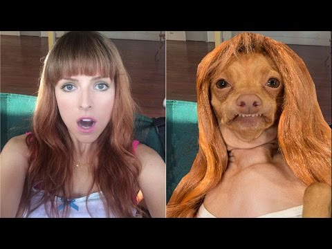 Tuna the Dog recreates Anna Kendrick's Instagram photos