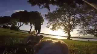 Gopro Fetch Harness On A Shih Tzu, Watching A Sunset In Hawaii.