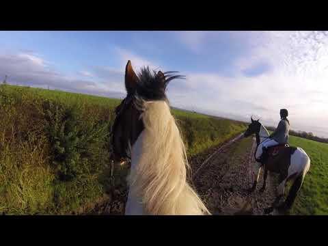 Slightly keen Murphy! (Hunting GoPro)