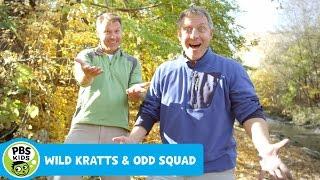 Video ODD SQUAD & WILD KRATTS | The Kratt brothers are experiencing something very odd | PBS KIDS download MP3, 3GP, MP4, WEBM, AVI, FLV April 2018