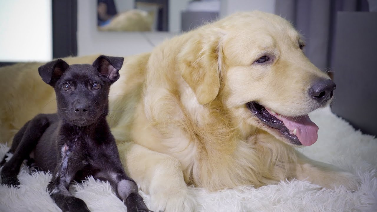 捨てられた子犬のデンが元気になって心が開いて懐くまでの2週間の記録