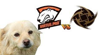 Dog Predicts Results In Cs:go, Nip-virtus.pro, 21-05-2014