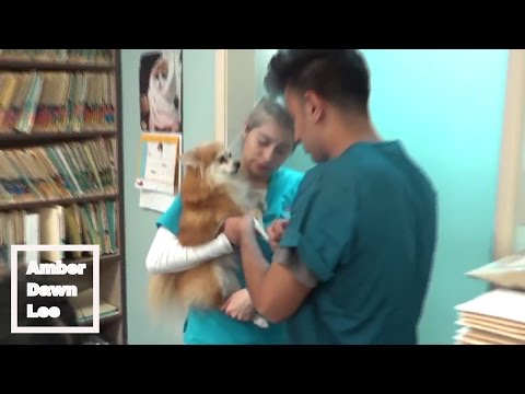 RESCUE DOG ON DRUGS! AMBERDAWNLEE VLOGS