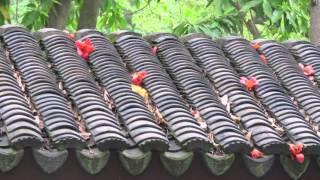 Достопримечательности Гонконга: китайский сад и город за стеной(Китайский сад города за стеной на Коулуне - уникальное место в Гонконге. Это бывший китайский анклав в брита..., 2016-04-25T11:07:59.000Z)