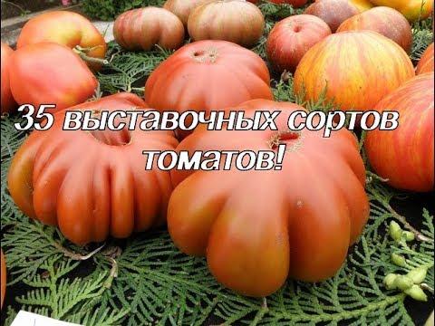 Презентация новых сортов томатов (часть 2)