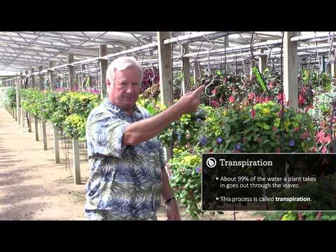 "Plant Physiology for Growers, Part 1: How Plants ""Think"""