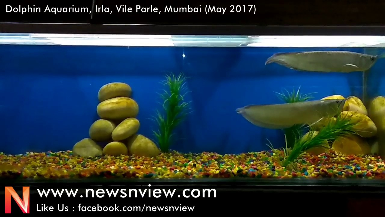 Fish aquarium in vile parle timing - Dolphin Aquarium In Mumbai At Vile Parle Best Aquarium In Mumbai For Kids