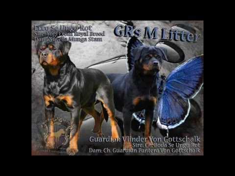 Guardian Rottweilers Youtube