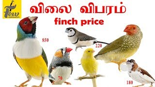 all finches price list in india new price update 2019