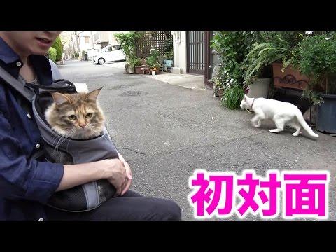 ちゃちゃを野良猫に会わせてみた