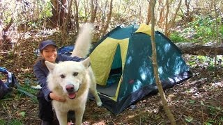 Аляскинский Маламут / Пес породы Маламут / Собака in travel