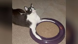 So FREAKING FUNNY that you'll LAUGH FOR HOURS! - SUPER FUNNY CATS