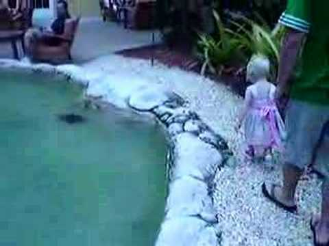 Ava, the turtles & the Cayman Islands