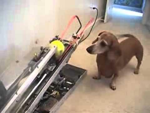Lance balle pour chien youtube - Fabriquer panier pour chien ...