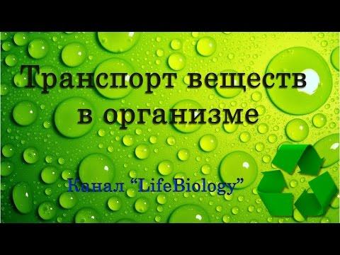 Транспорт веществ в организме