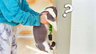 Cat Intelligence Test! Are Cats Smart?
